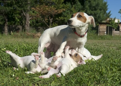 Puppies bij hun moeder