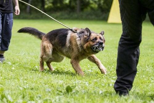 Hoe voorkom je dat je hond agressief wordt?