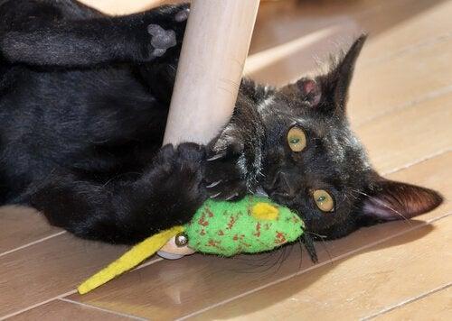 Kat aan het spelen