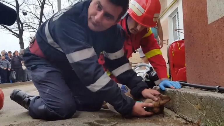 Brandweerman redt hond met mond-op-mondbeademing