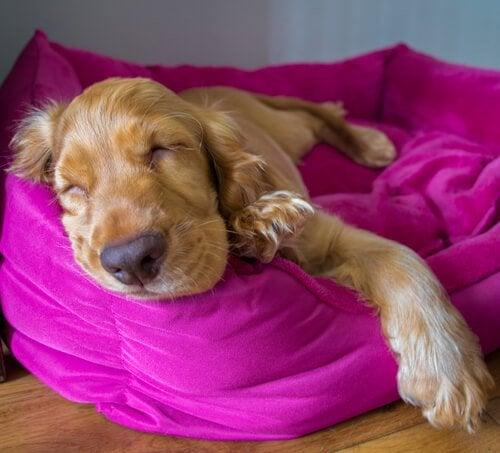 Hoe zien dromen van honden er eigenlijk uit?