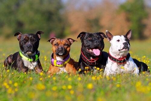 Honden in het gras