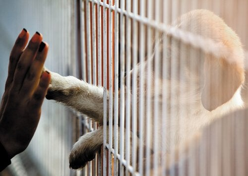 Je kunt helpen ook al kun je geen dier adopteren