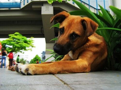 Hoe voorkom je dat je hond van de planten eet?