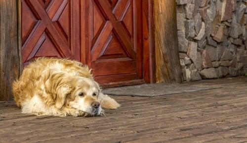 Hond rust uit