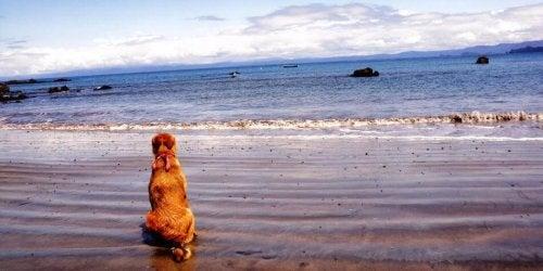 Guacharaca, de hond die een schrijfster werd