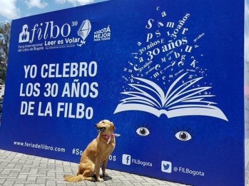 Schrijfster-hond