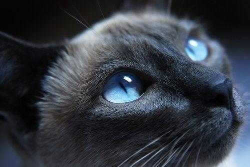Zwarte kat met gespannen gelaatsuitdrukking