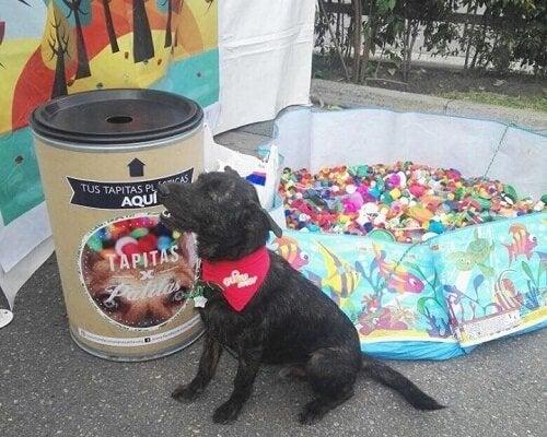 Recyclen om dieren te helpen