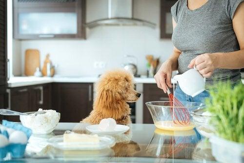 Dieren in je keuken