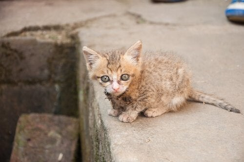 Een huisdier adopteren is niet moeilijk. Neem bijvoorbeeld een verlaten kat is huis.