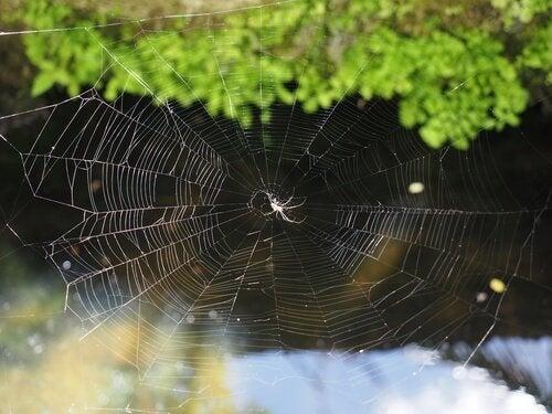 Hoe spinnen hun web bouwen