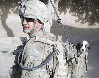 Hond in rugzak van soldaat