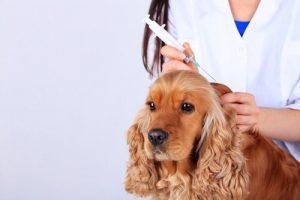 Hond die inentingen krijgt