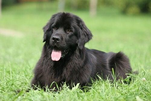 Wat zijn de 8 luiste hondenrassen?
