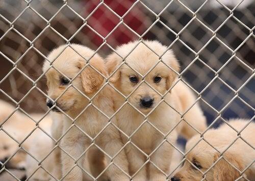 Stop het fokken van puppy's in puppyfabrieken!