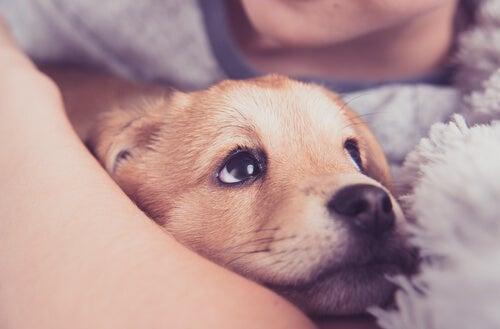Een puppy in iemands armen