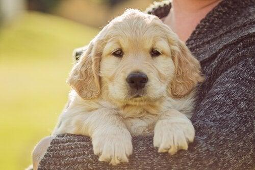 Hond vriend