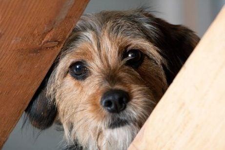 Hond met hoofd tussen spijlen