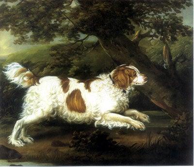 Hond-uitgestorven-rassen-English_Water_Spaniel