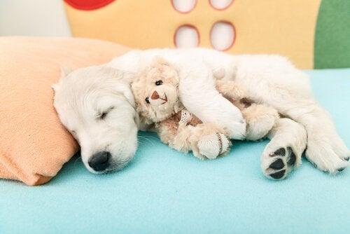 Airbnb voor honden: een nieuw alternatief