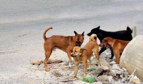 Honden op een geïnfecteerde plek