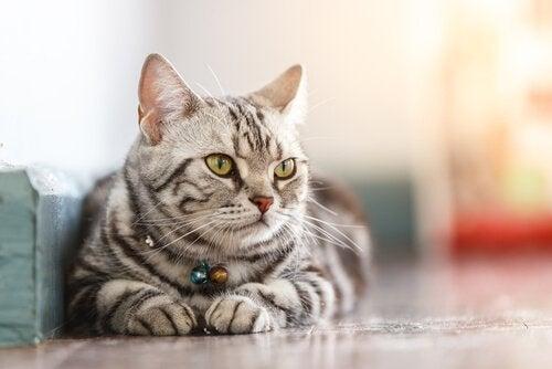 Een gestreepte kat