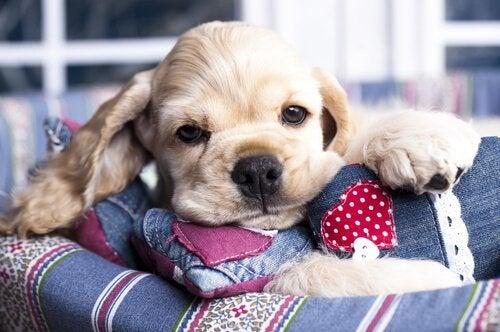 De voordelen van honing voor honden