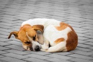 Vermiste hond die bang op straat ligt