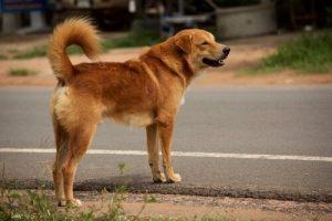 Vermiste hond die de weg probeert over te steken