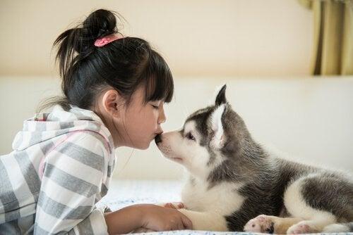 Wat te doen met een pup die nog niet uit huis mag