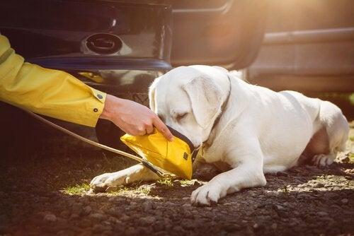 Een witte hond eet uit een geel bakje