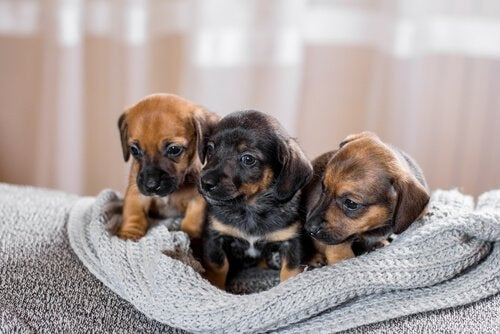 Puppy's in mand