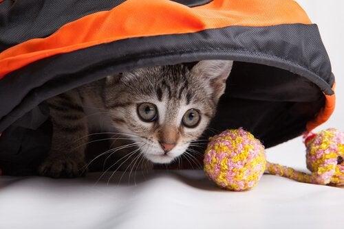 Een kat speelt met een bolletje