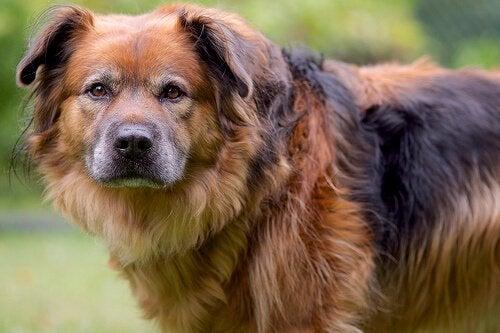 Het schuldige gezicht van een hond : wat verbergt hij?