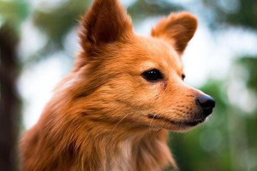 Zes sterrenbeelden van honden