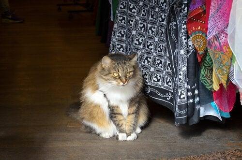 Kat naast een tafel