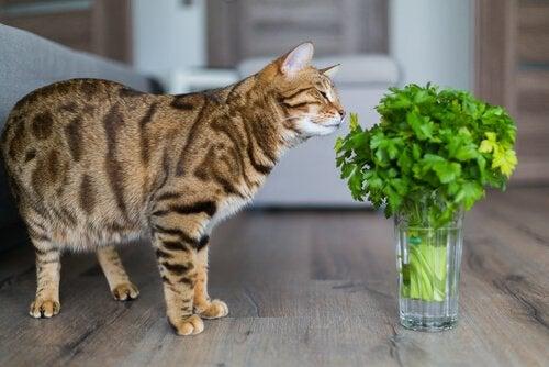 Kat die aan een plant snuffelt