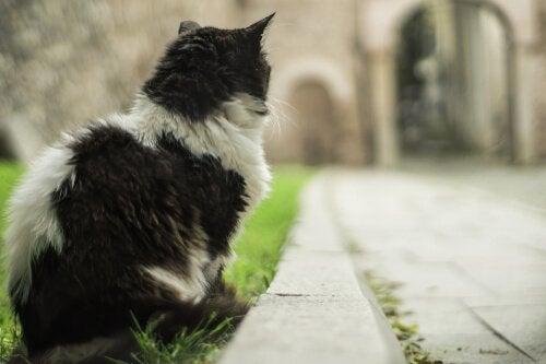 Kat naast een pad in de stad van de katten