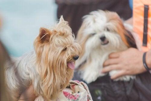 Hoe je het beste met je huisdier praat