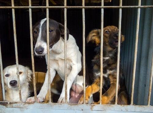 Drie honden met symptomen van depressie door opsluiting in een kooi