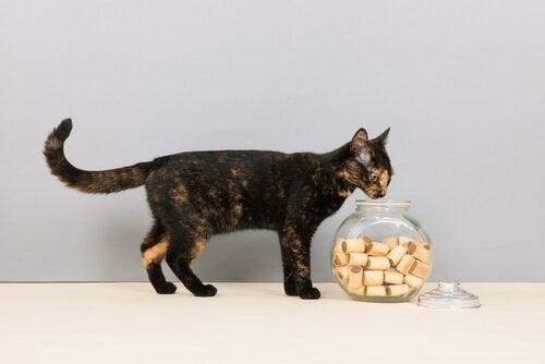 Kat met koekjes