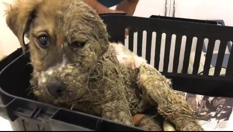 Pascal de puppy bedekt in lijm