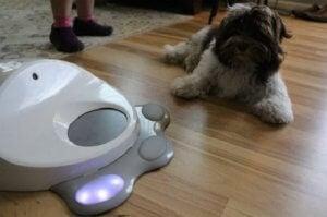 Interactief speelgoed voor honden