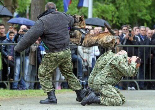 Politiehond die een man aanvalt