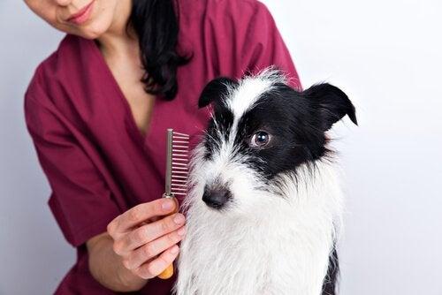Trim de vacht van je hond met een borstel