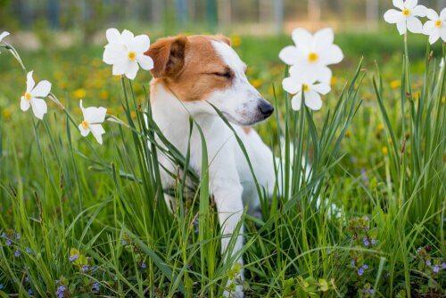 Hond tussen de bloemen