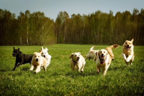 Het roepen van je hond als hij los loopt