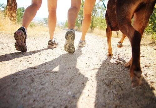 Honden volgen hun baasjes tijdens het lopen