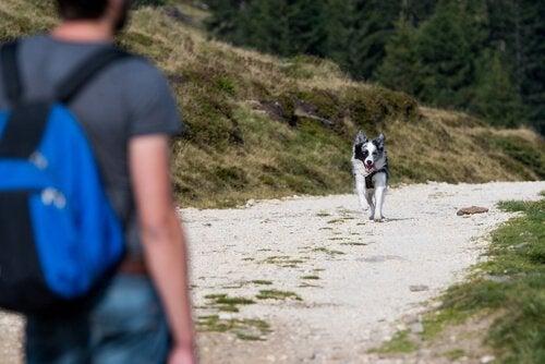 Hond die naar zijn eigenaar komt als hij wordt geroepen